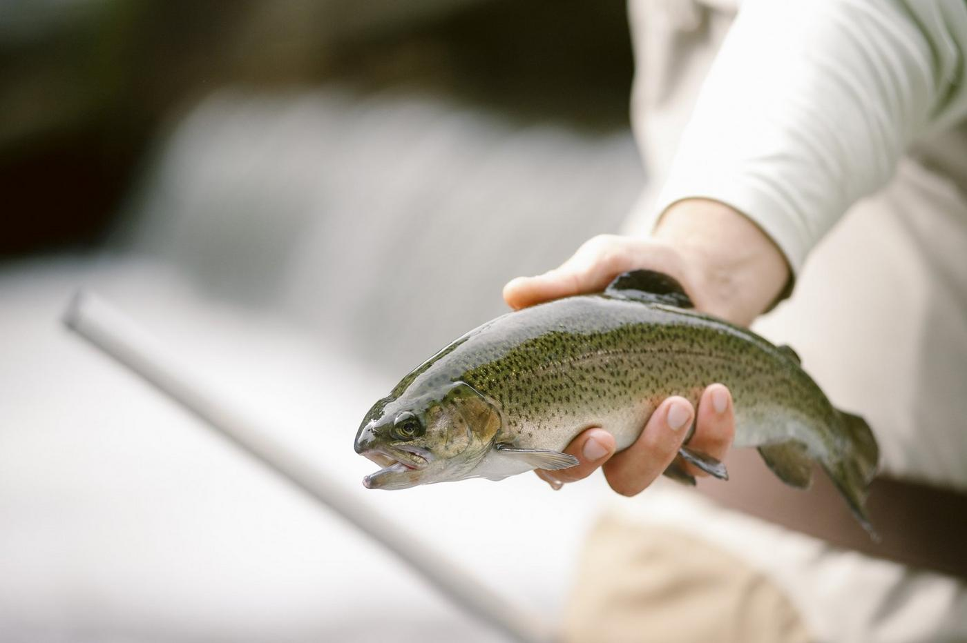 Angler holding a trout
