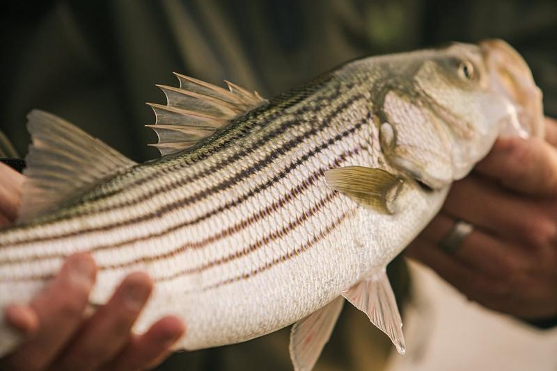 Angler holding fish