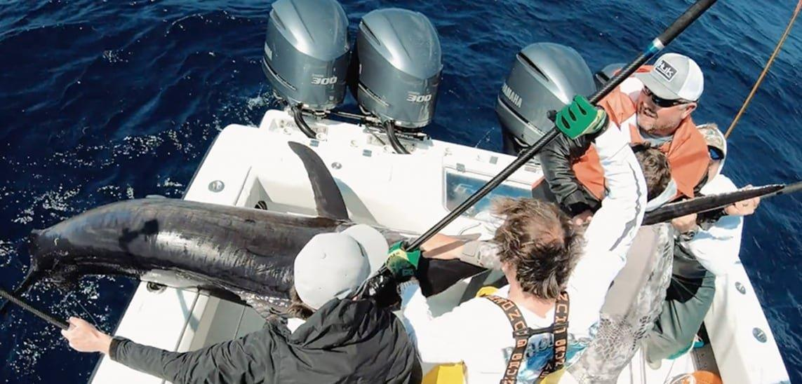 Angler crew pulling swordfish onto boat