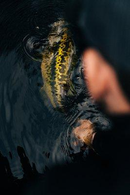 Bass in water
